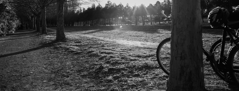 Bicycles in a park at sunset